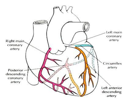 vasi coronarici bypass aorto coronarico giuseppe speziale