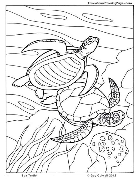 coloring page ocean animals coloring pages of sea animals az coloring pages