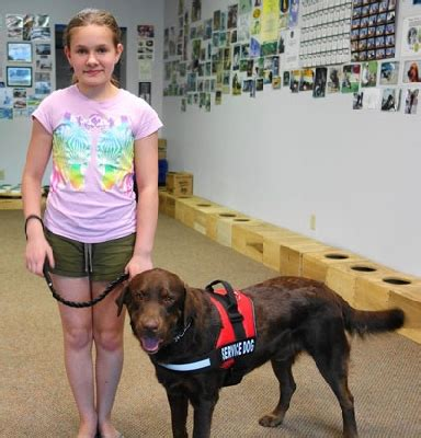 service dogs for epilepsy the service seizure alert dogs
