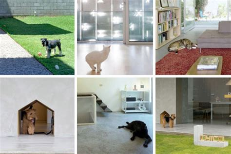 pet project architectural photography household animals
