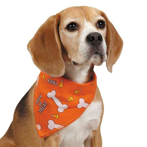 puppy bandanas trick or treat bandana orange baxterboo