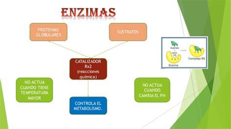 proteinas y enzimas enzimas y acidos nucleicos