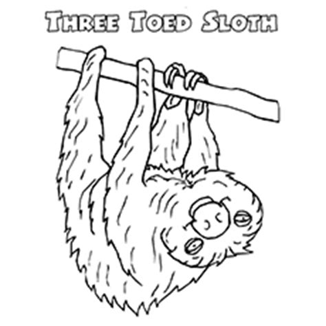 1 sloth coloring book best sloth coloring book for adults animals coloring book about sloths volume 1 books top 10 sloth coloring pages for your toddler