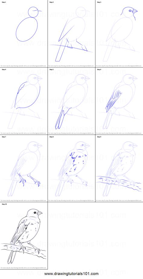 Drawing Step By Step by How To Draw A Parakeet Printable Step By Step Drawing