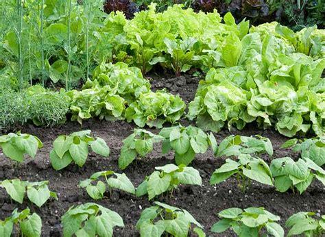 What Is Best Fertilizer For Vegetable Garden The Well Fed Garden Feeding Vegetables