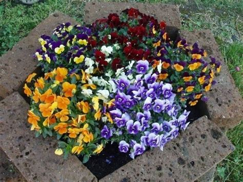 piante in vaso invernali piante da giardino invernali piante da giardino piante