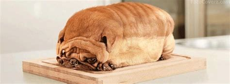 bread pug 10 free animal and pet photo timeline cover picture websites