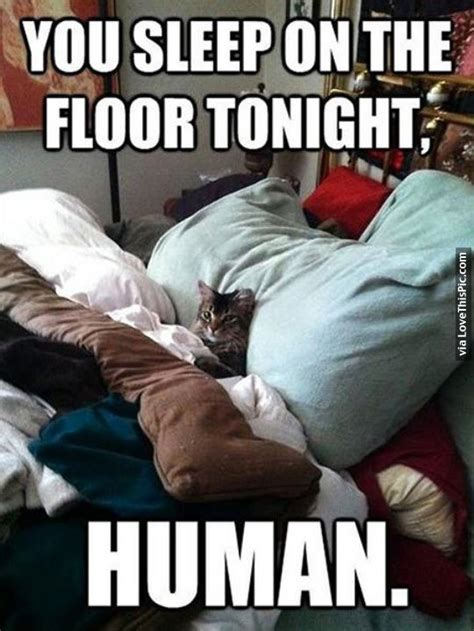 Get Your On The Floor Tonight by You Sleep On The Floor Tonight Human Pictures Photos