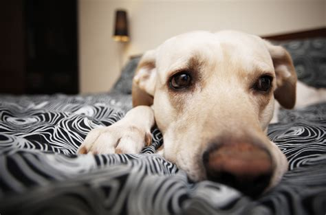helping dogs with separation anxiety 5 stress free ways to deal with separation anxiety