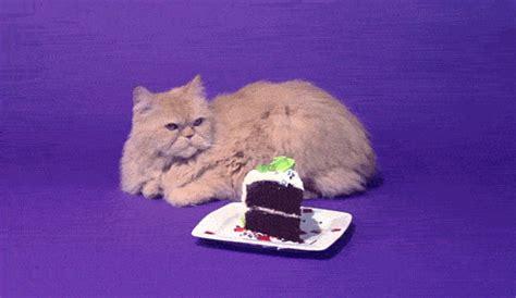 cat gif on a test 233 passer une semaine sans sucre