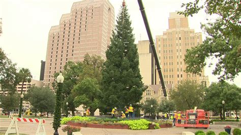 city christmas tree arrives at travis park