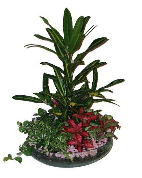 plantas florales de interior plantas florales de interior venta de plantas plantas