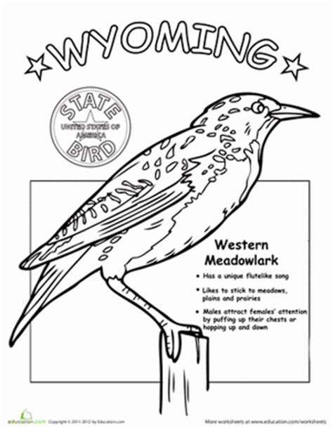 wyoming state bird worksheet education com