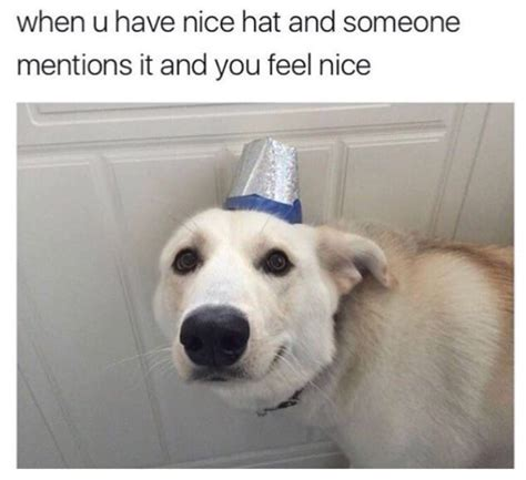 Internet Dog Meme - 100 dog memes that prove the internet is not all made out from cats