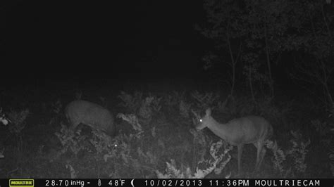Download image little people caught on deer cam pc android iphone