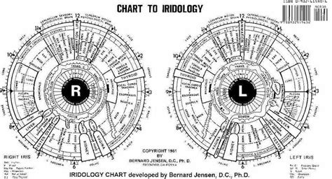 Dr Morse Detox Certification by What Is Iridology Grapegate