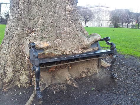 bench eating bench eating tree a tree in the grounds of the kings inn