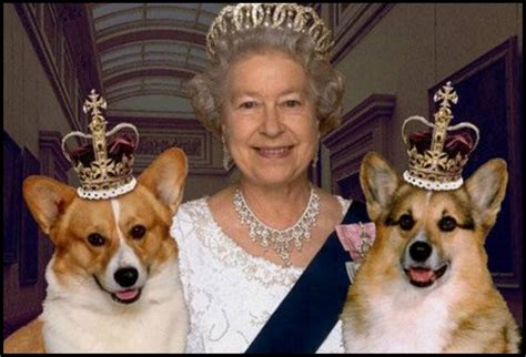 Queen Corgi | keeper of the queen corgis pens explosive new tell all book