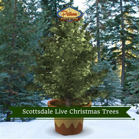 best 28 when to buy a live christmas tree where to