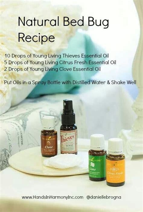 does lavender repel bed bugs bed bug recipe pest control pinterest