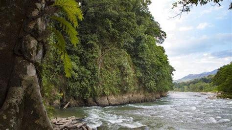 amazon adalah jika hutan hujan amazon adalah paru paru bumi leuser