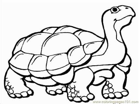 coloring pages tortoise 1 reptile gt turtle free