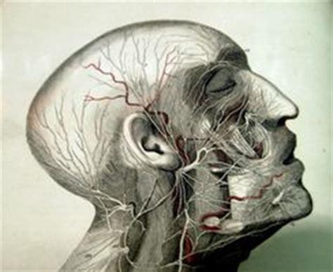 seni diversi bipolare mascellare malattia seno salute sigcins