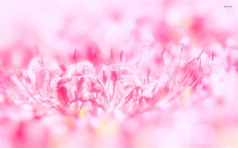 wallpaper cantik pink flower wallpapers pink mobile free download gt subwallpaper