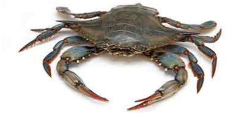 boat rentals in nj for crabbing best crabbing places in new jersey
