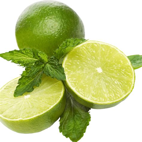 lime slice lime slice png www pixshark com images galleries with