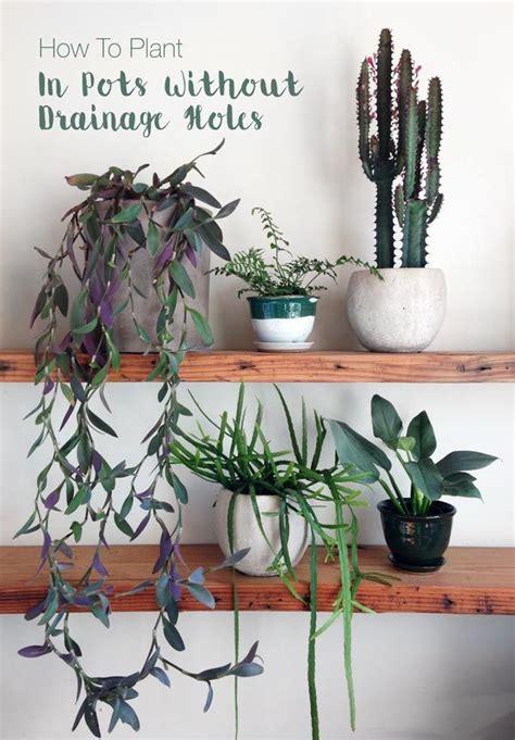 plant   pot  drainage holes plants