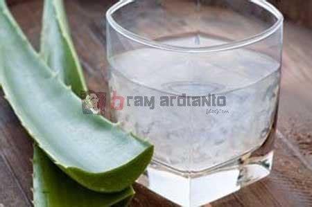 Obat Asam Lambung Lidah Buaya lidah buaya untuk mengobati asam lambung bramardianto
