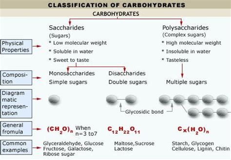 carbohydrates notes pdf biochemistry revision notes in a level and ib biology