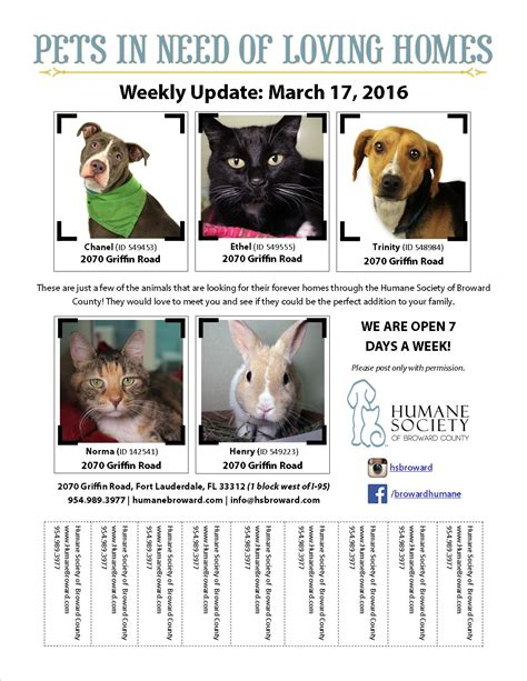 Pet Flyer March 17 2016 Humane Society Of Broward Countyhumane Society Of Broward County Pet Adoption Flyer Template