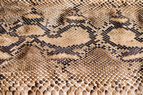 design pattern with python python snake skin pattern stock image image of royal