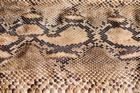 python string pattern design patterns python snake skin pattern stock image image of royal