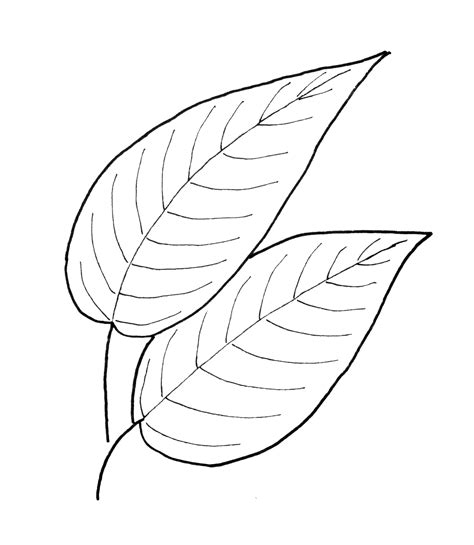 leaf pattern with lines fall leaf pattern printables fall leaves leaves and