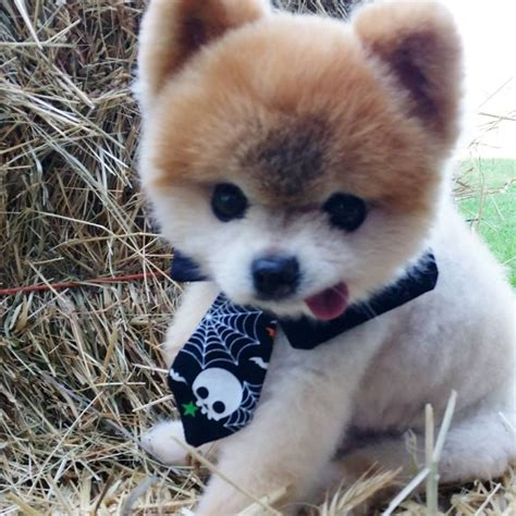 how is a a puppy walter s story a puppy mill stud survivor