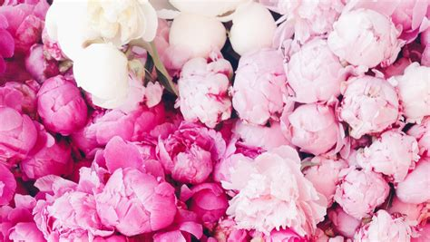 pink peonies and other flowers from long ago new england 12 surprising facts all peony enthusiasts should know