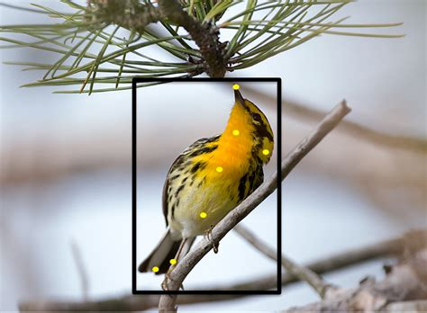 cornell bird watching website new website can identify birds using photos