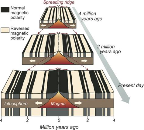 Zebra Pattern Sea Floor | paving the seafloor brick by brick oceanus magazine