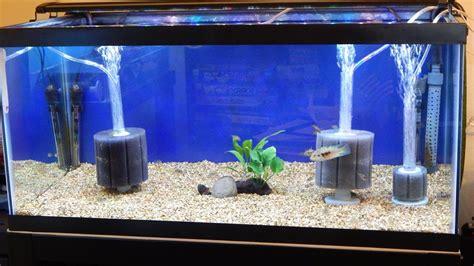 membuat filter aquarium dengan aerator american aquarium products supply ati sponge filters