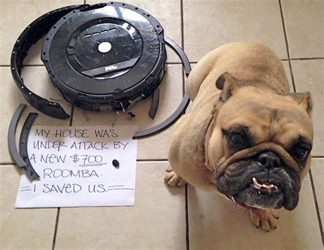 roomba vs bulldog vs roomba