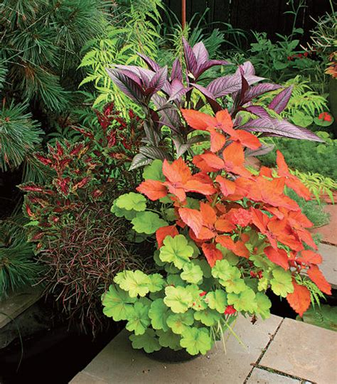 container gardening plants potted plants the of container gardening