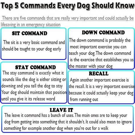 puppy commands found image search results hd breeds picture