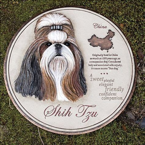 wall eyed shih tzu adorable shihtzu pictures on 205 pins