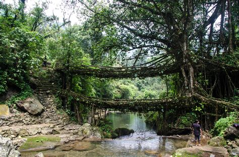 what is root bridge file double decker living root bridge1 jpg