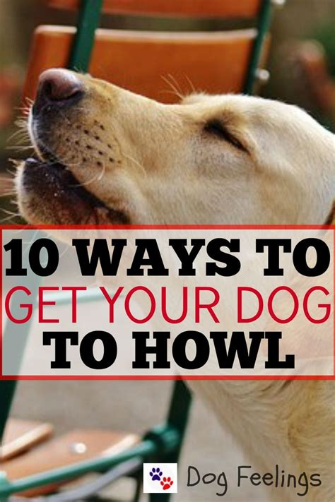 how to get your to howl 9058 best animals images on dogs dogs and big dogs