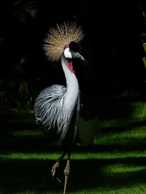 gambar alam rumput sayap hewan margasatwa liar