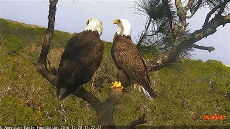 aef nefl eagle nest romeo juliet meeting in hamlet
